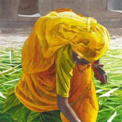 Gathering Maize