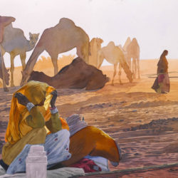 Living With Camels