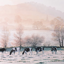 Grazing in the Frost