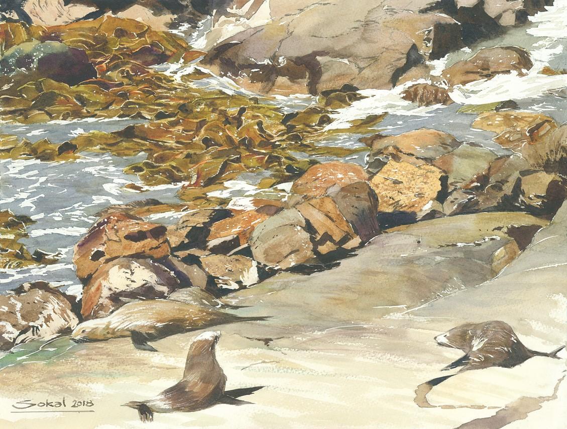 Seals at Katiki Pt. NZ